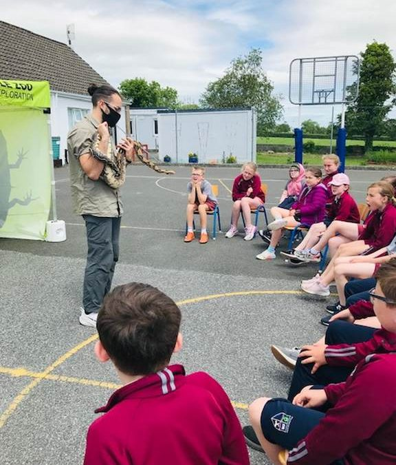 A Visit from The Reptile Zoo! 🦎 🐍 🦖🐢